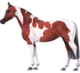 Immagine Paint horse