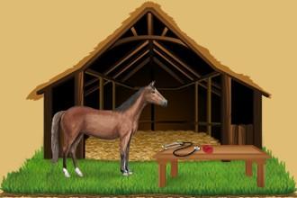 Occupati anche dei cavalli che appartengono agli altri allevatori accogliendoli nel centro equestre.
